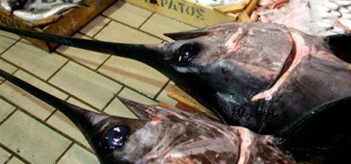 Freno a la pesca del pez espada en el mar Mediterráneo