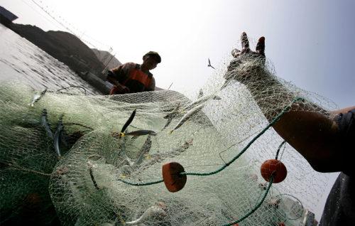 Mar destina más de un millón de euros para la eliminación gradual de los descartes