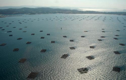 La Xunta aprueba el nuevo reglamento de la Denominación de Origen Protegida Mexillón de Galicia