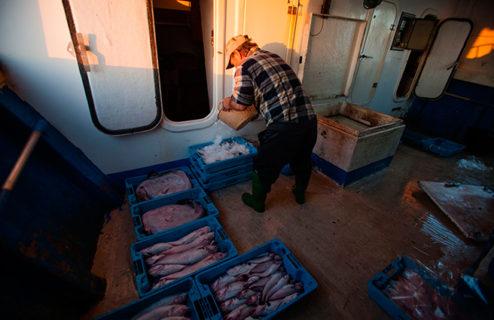 El Plan Plurianual de gestión de la pesca demersal del Mediterráneo a debate. Una reflexión fundamental.