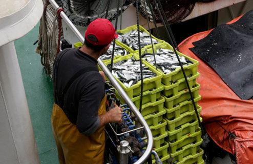La gestión pesquera en Galicia