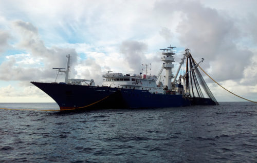 Atún listado Echebastar en el océano Índico obtiene la certificación de MSC