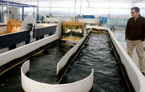 El cultivo de microalgas será una alternativa para frenar la sobrepesca