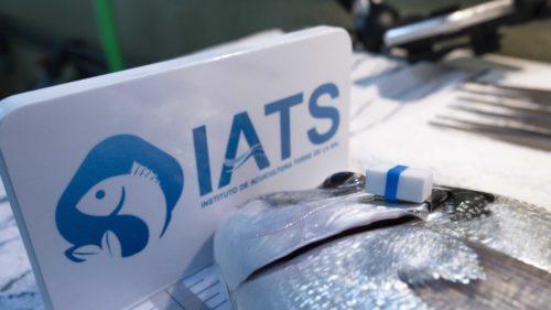 Desarrollan en el Instituto Torre de la Sal un dispositivo inteligente para monotorizar peces