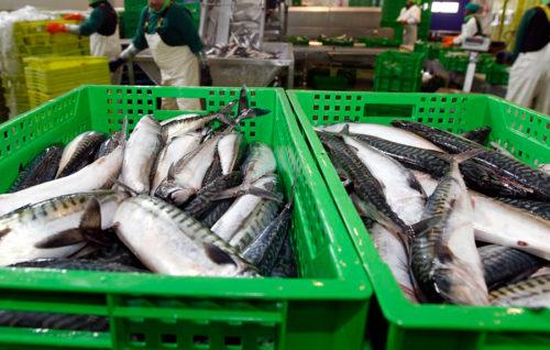 España modera el recorte de las capturas de merluza del sur y aumenta la cuota de jurel