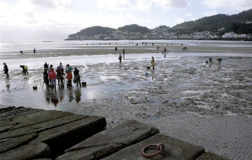 El sector marisquero recibe de la Xunta un millón de euros para regenerar zonas de trabajo