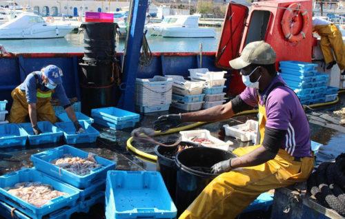 La situación provocada por la COVID-19 en el sector pesquero español