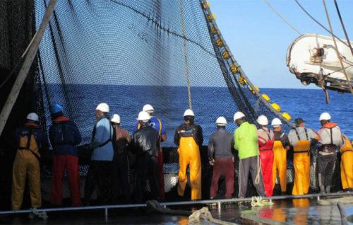 El atún genera un 20 % del valor de la pesca siendo España líder europeo en capturas e industria