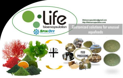 Life Bioencapsulation: Una spin-off que evalúa el uso de las algas<br> en piensos funcionales para acuicultura