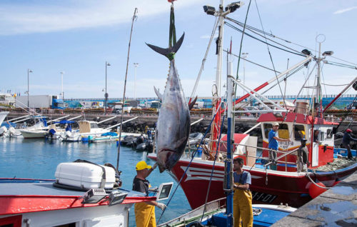 El TS anula parte del decreto del atún rojo en el Atlántico oriental