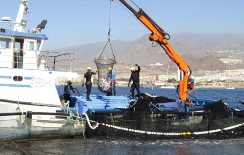 Dos millones de euros para compensar pérdidas del sector pesquero canario
