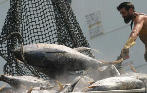 La UE baraja importar 810.000 toneladas  de pesca sin arancel