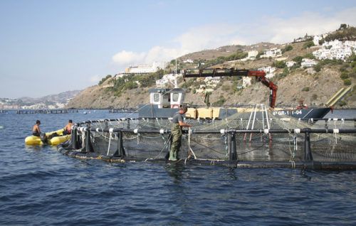Aprobado el Decreto de ayudas a la acuicultura por 1,5 millones