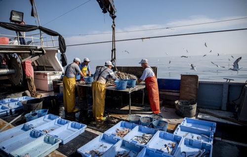 Proyecto  Upcycling The Oceans 2019. Pescadores gallegos recuperan más de 4.600 kg de basura marina