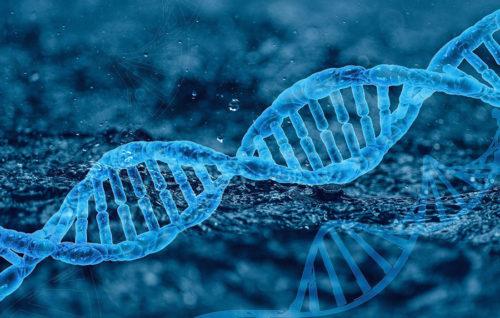 El CSIC y la UVigo hallan una variabilidad genética en el mejillón única en animales