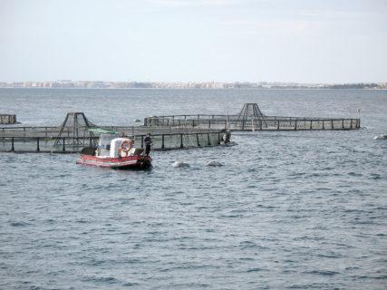 Andalucía anuncia ayudas por valor de 685.000 euros a la acuicultura