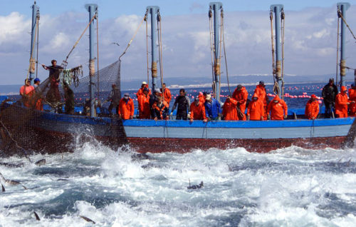 La EFCA coordinó una campaña específica de control del cerco y almadrabas de atún rojo